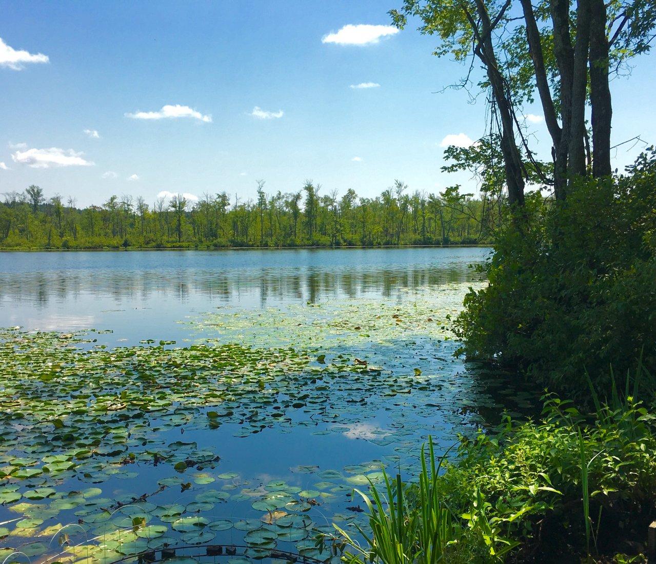 Ballston Lake Frontage